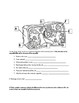 Cells (organelles) Study Guide for Test