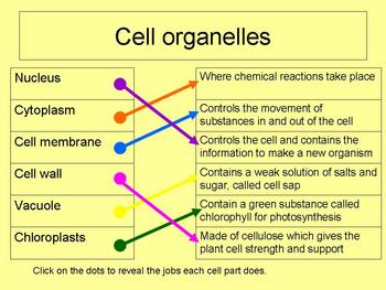 Cells scheme of work and resources