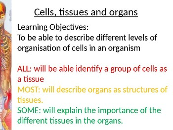 Cells, tissues and organs