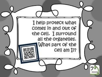 Cells:  QR code {vocabulary review}