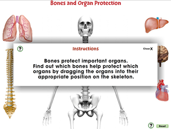 Cells,Skeletal & Muscular Systems: Bones and Organ Protection - PC Gr. 3-8