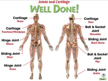 Cells,Skeletal & Muscular Systems: Joints and Cartilage - PC Gr. 3-8