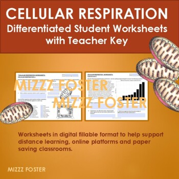 Cellular (Aerobic) Respiration Differentiated Worksheets with Graphs and Key