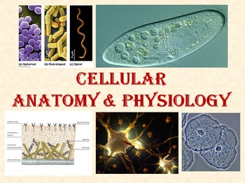 Eukaryote Cells with Prokaryote Review Power Point