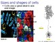 Cellular Biology Notes Powerpoint