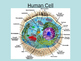 Cellular Biology PowerPoint