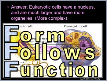 Cell Unit Homework
