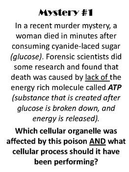 Cellular CSI: Organelle Mystery Stations  [Disponible en español]