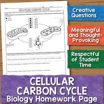 Cellular Carbon Cycle Biology Homework Worksheet