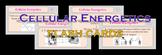Cellular Energetics Flash Cards