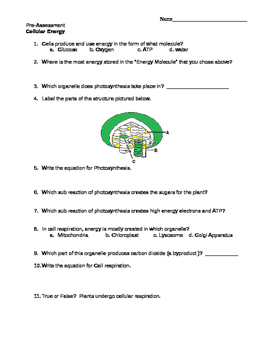 Cellular Energy (Photosynthesis and Cell Respiration) PreAssessment