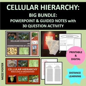 Cellular Hierarchy, Organization of life and Characteristics of Life  BIG Bundle