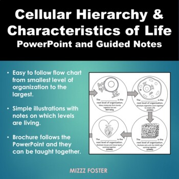 Cellular Hierarchy, Organization of life and Characteristics of Life Bundle