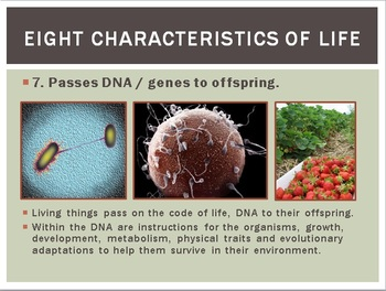 Cellular Hierarchy and Characteristics of Life EditablePower Point