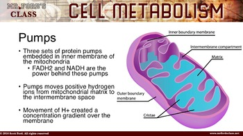 Cellular Metabolism: Anatomy and Physiology