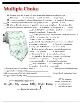 Cellular Metabolism Test or Review w/key
