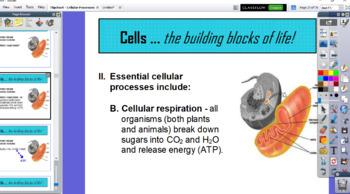 Cellular Processes - Flipchart