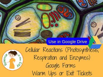 Cellular Processes Google Form Exit Ticket or Bell Ringer Assessments
