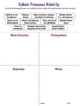 Cellular Processes Match Up Activity
