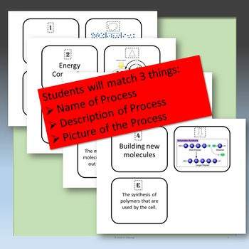 Cellular Processes Matching Cards