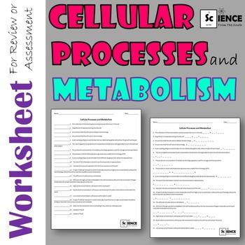Cellular Processess and Metabolism Worksheet