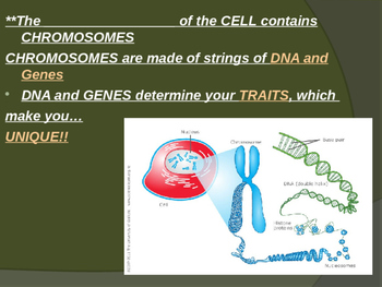 Cellular Reproduction Powerpoint
