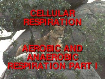 Cellular Respiration -- Aerobic and Anaerobic Respiration Part I