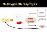 Cellular Respiration: Anaerobic Respiration; Fermentation