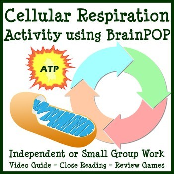 Cellular Respiration Webquest Worksheets Teachers Pay