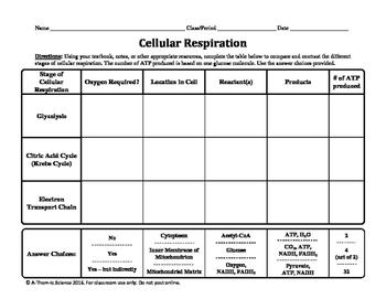 Cellular Respiration Chart