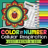Cellular Respiration Color by Number - Science Color By Number