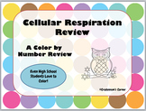 Cellular Respiration Color By Number Review