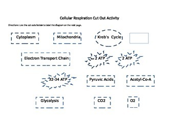 Cellular Respiration Color, Cut, and Paste activity