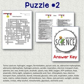 Cellular Respiration Crossword Puzzles