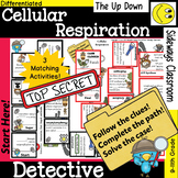 Cellular Respiration Detective-3 Domino Path Matching Activities-Forest Theme