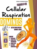 Cellular Respiration - Domino Review Cards - High School