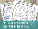 Cellular Respiration Doodle Notes