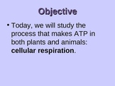 Cellular Respiration Dynamic Graphic Organizer