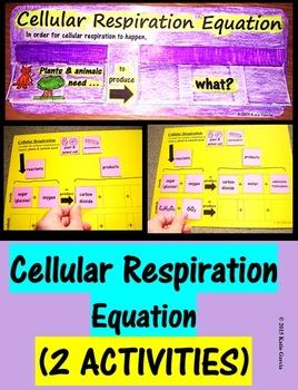 Cellular Respiration Equation Activities