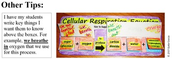 Cellular Respiration Equation Activities