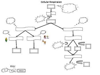Cellular Respiration Flow Chart Activity