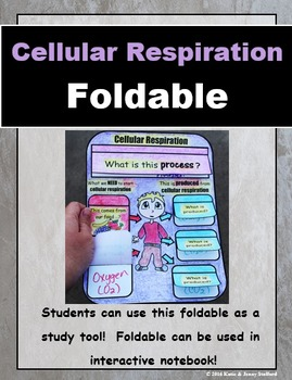 Cellular Respiration Foldable
