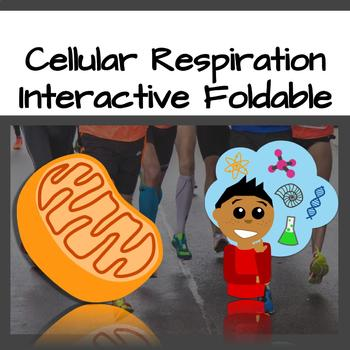 Cellular Respiration Foldable