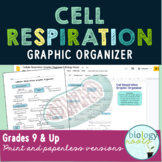 Cellular Respiration Graphic Organizer