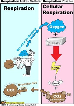 Comic: Cellular Respiration & How It Relates to [Physical] Respiration
