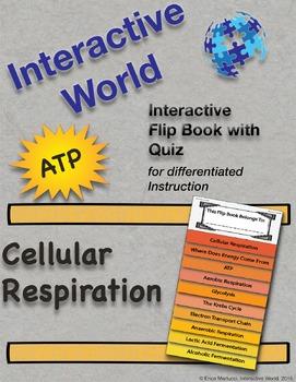 Cellular Respiration Interactive Flip Book and Quiz
