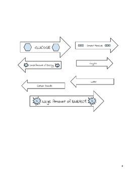 Cellular Respiration Interactive Notebook Diagram