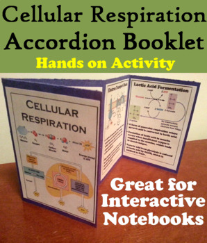 Cellular Respiration Interactive Notebook Foldable