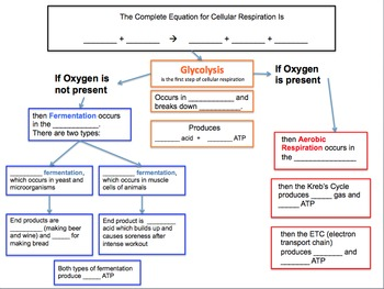 Cellular Respiration Label Diagrams and Graphic Organizer