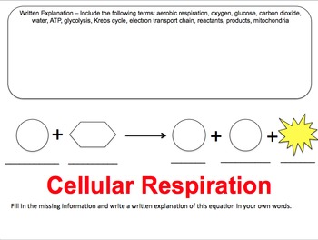 Cellular Respiration Label Diagrams And Graphic Organizer By Thesciteacher